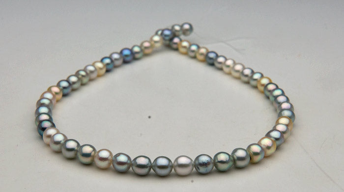 multicolored natural color Vietnamese Akoya Pearls