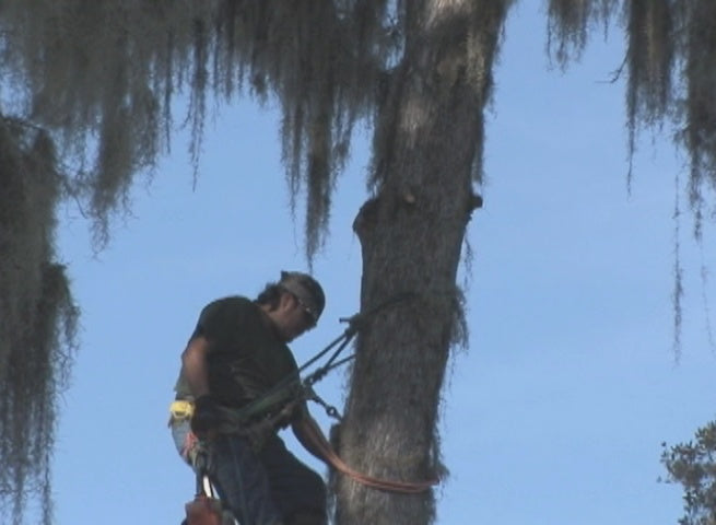 Tree Trimming (Public Agency) Safety Video