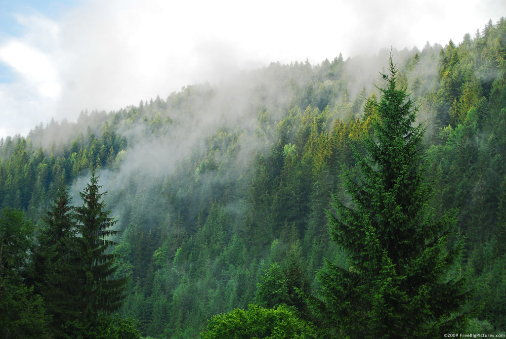 Illegal Cannabis Grows are Major Concern for US Forests