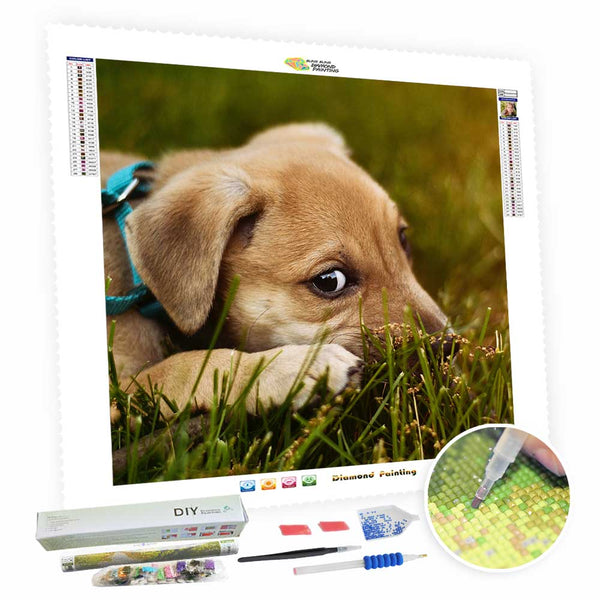 Turn Photos Into Diamond Art Painting - For Your Pet - BlingPainting