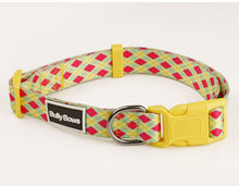 Vibrant Argyle Dog Collar