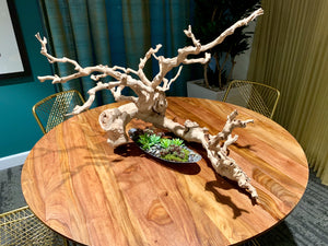 Tree grapevine piece