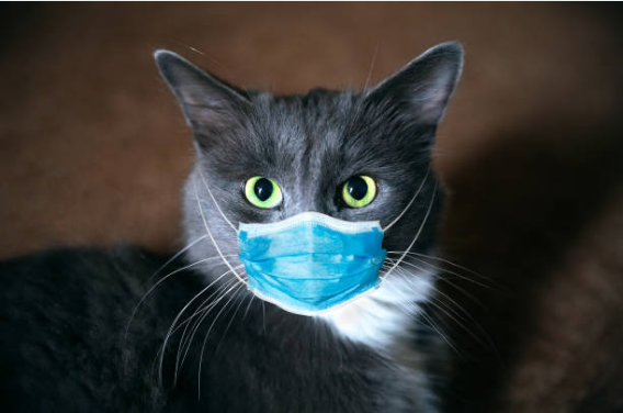 Coronavirus and Cats: A Helpful Guide for Cat Owners