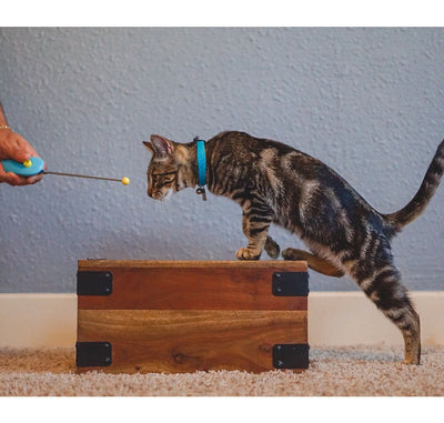 Cat School's Clicker Training Kit