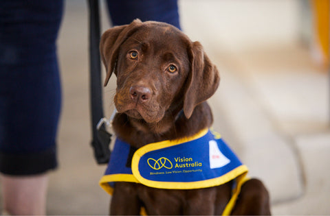 Vision Australia Seeing Eye Dogs