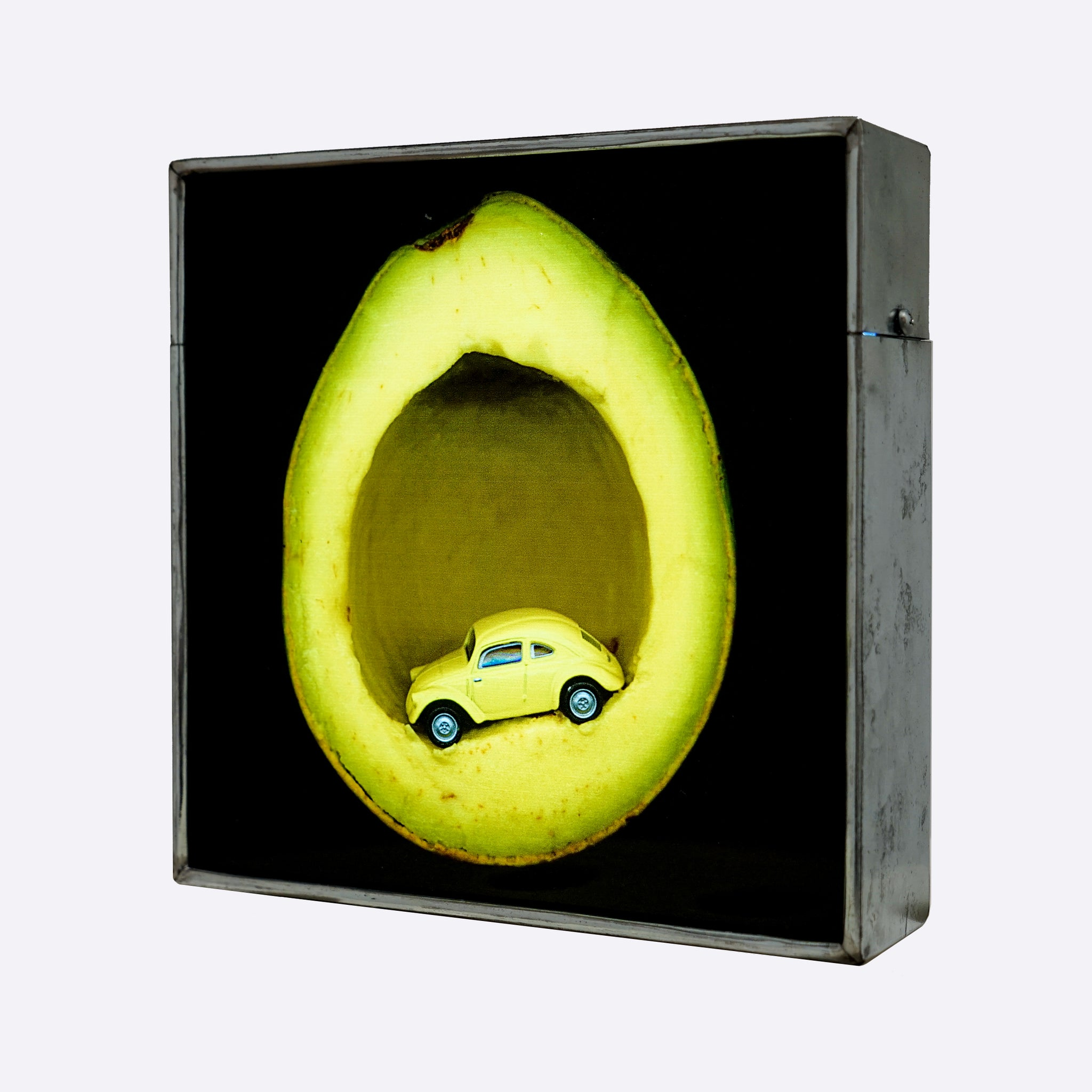 Avocado Beetle