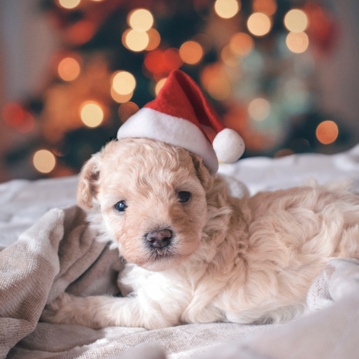 10 Christmas Gifts for your Pets