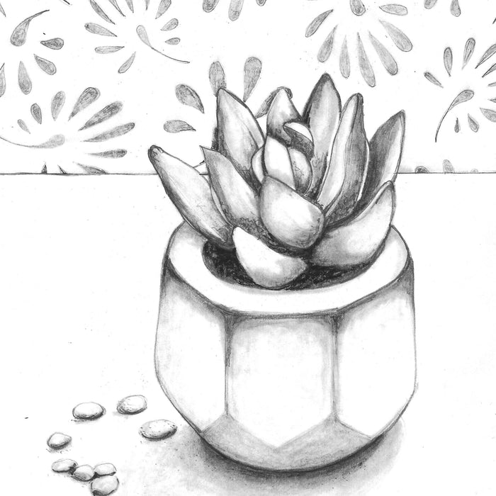 Succulent Sketch: How to Draw with a Photo Reference