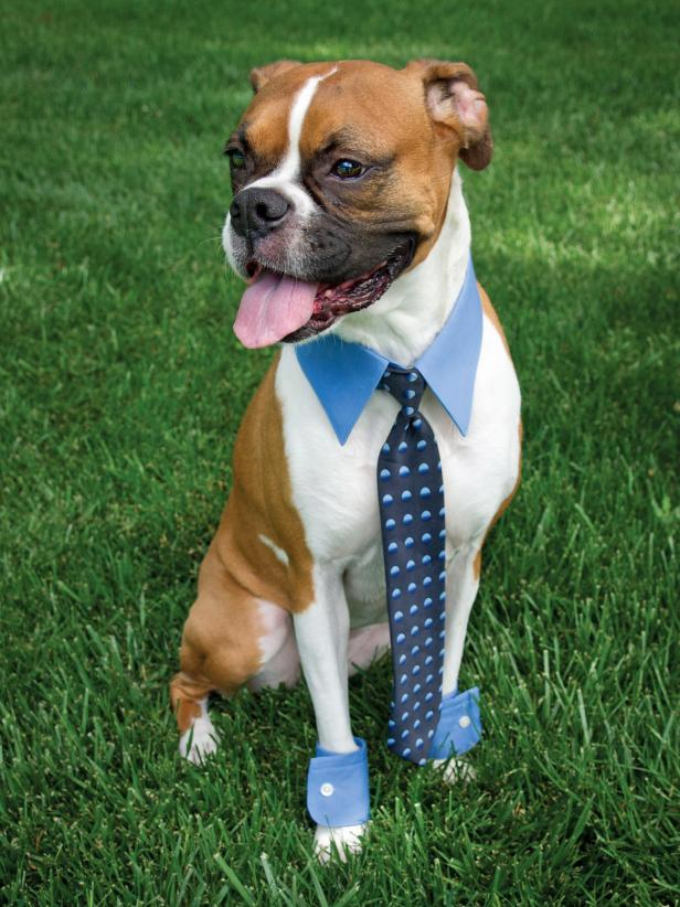 Halloween-dog-costume-business-