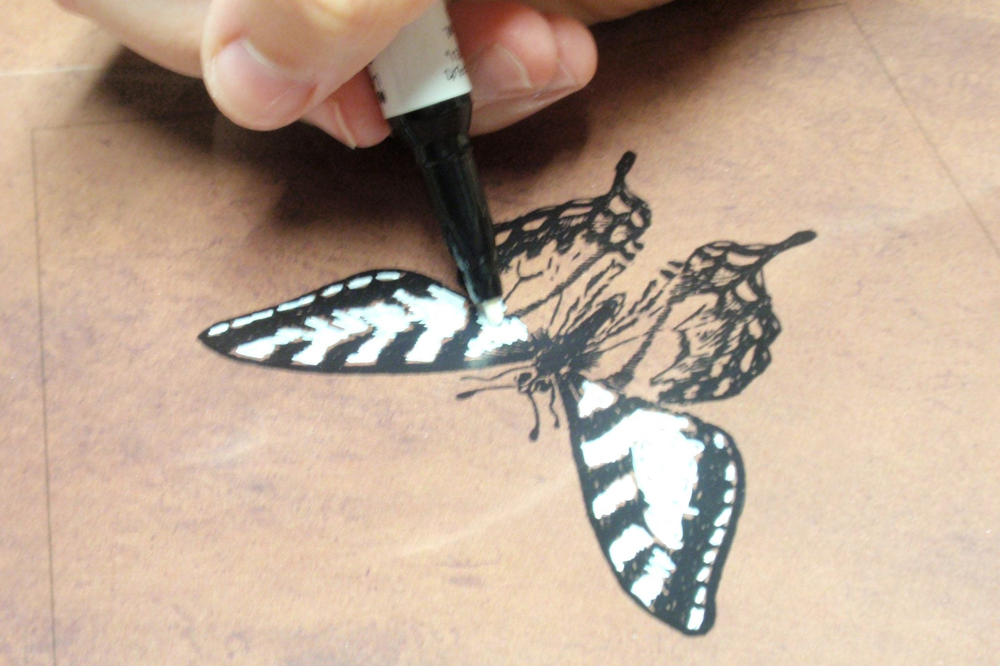 use white paint pen on back of insect