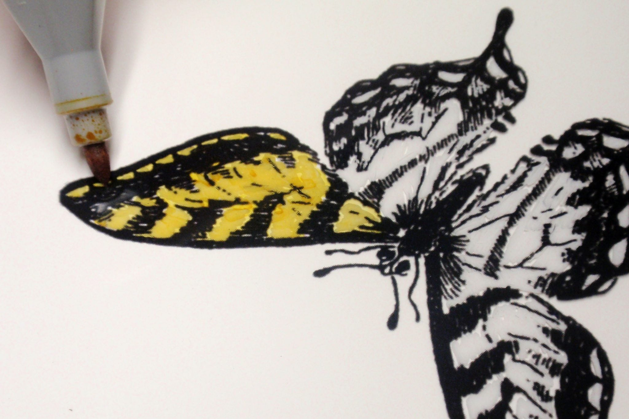 color insect with marker