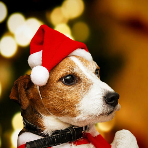 1pc Christmas Pet Hat Santa Claus Hat for Cats Dogs Puppy
