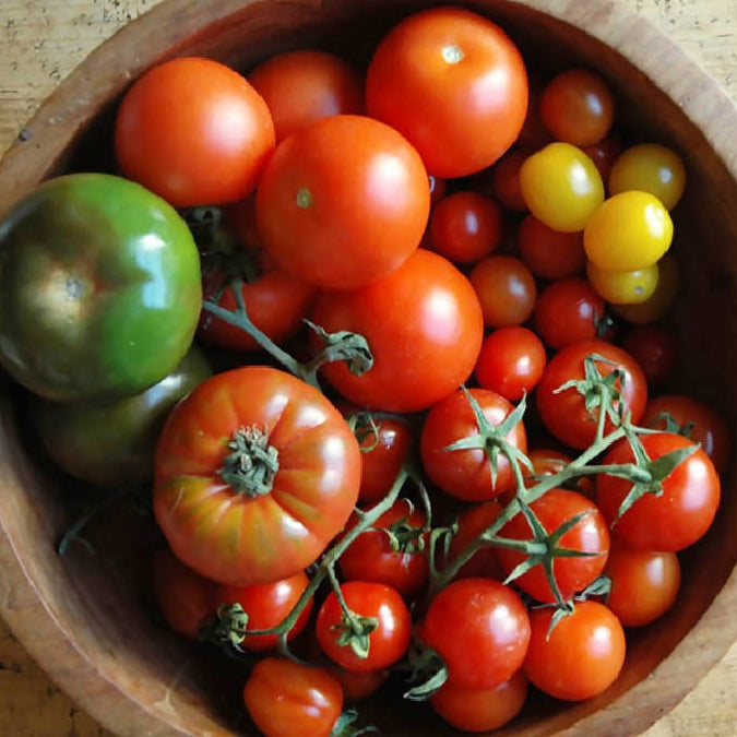 British Speciality Tomatoes