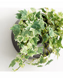 Dina Wall Planter