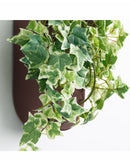 Dina D Wall Planter