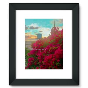Bougainvillea. Tower 2 Bougainvillia. Tower 2. North Strand. Oceanside, California - Framed Fine Art Print - 6 Sizes - Choose Black or White Frame with Matte