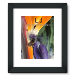 Birds of Paradise  Framed Fine Art Print