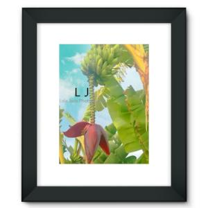 Framed Fine Art Print - Banana Tree. Pacific Street. Oceanside, California lola jade cimmino photography