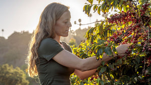 California-Grown Coffee at California Prices