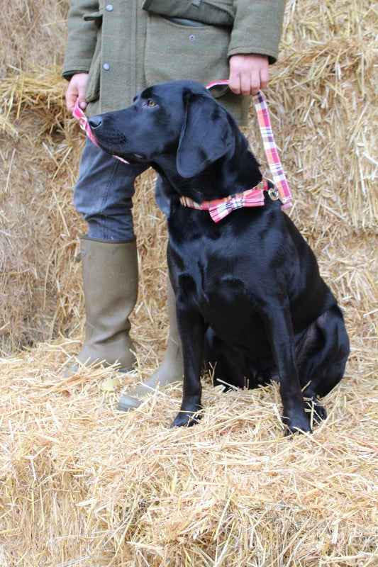 Bramley and Walker - dog collars, leads and bow ties