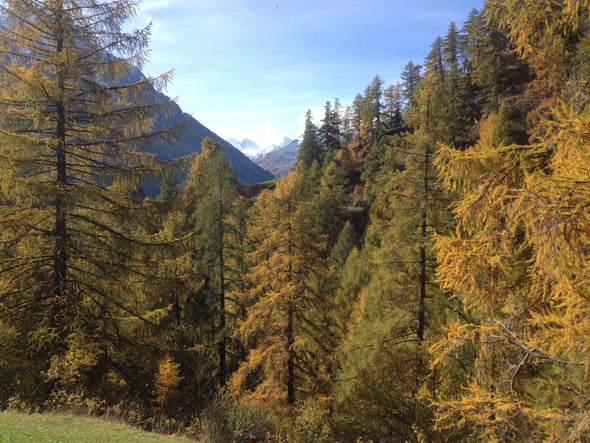 Trailrunning Camp Engadin 25. bis 27. 9. 2020