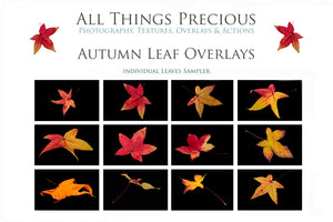 AUTUMN / FALL LEAF OVERLAYS Digital Overlays