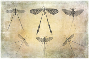 DRAGONFLY PHOTOSHOP BRUSHES