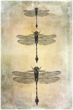 Load image into Gallery viewer, DRAGONFLY PHOTOSHOP BRUSHES