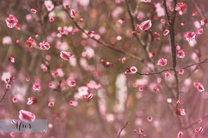 BLOSSOM PETALS AND BRANCHES Digital Overlays