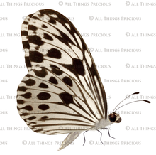 Load image into Gallery viewer, FAIRY WINGS and BUTTERFLIES Set 11