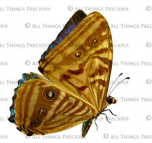 Load image into Gallery viewer, FAIRY WINGS and BUTTERFLIES Set 12