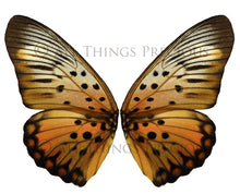 Load image into Gallery viewer, 20 Png BUTTERFLY FAIRY WING Overlays Set 1