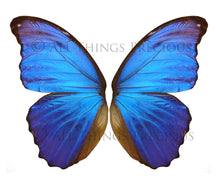 Load image into Gallery viewer, BUTTERFLIES BUNDLE No.1 Digital Overlays for Photoshop
