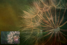 Load image into Gallery viewer, 10 Fine Art TEXTURES - CANVAS Set 4