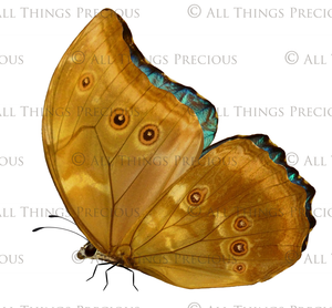 BUTTERFLIES BUNDLE No.2 Digital Overlays for Photoshop