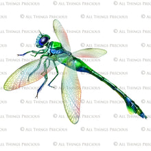Load image into Gallery viewer, DRAGONFLY OVERLAYS - Green & Blue - Digital Overlays