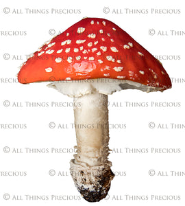 FAIRY MUSHROOM - AMANITA MUSCARIA Digital Overlays