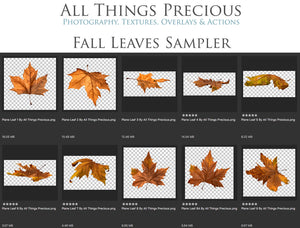 FALL LEAVES Digital OVERLAYS