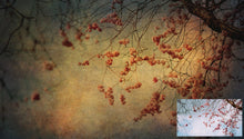 Load image into Gallery viewer, 10 FINE ART TEXTURES - Set 24