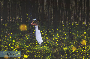 FIREFLIES Digital Overlays