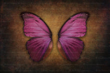 Load image into Gallery viewer, DIGITAL BACKDROP - Butterflies Set 4