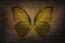Load image into Gallery viewer, DIGITAL BACKDROP - Butterflies Set 5