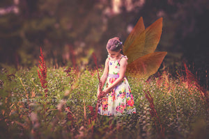 20 Png TRANSPARENT NATURE FAIRY WING Overlays Set 1
