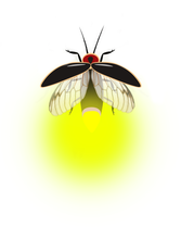 Load image into Gallery viewer, FIREFLIES Digital Overlays