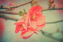 Load image into Gallery viewer, 10 Fine Art TEXTURES - SPRING Set 1