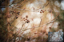Load image into Gallery viewer, 10 Fine Art TEXTURES - CREAMY Set 11