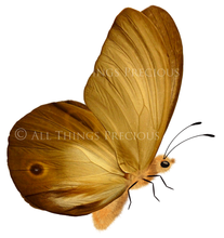 Load image into Gallery viewer, FAIRY WINGS and BUTTERFLIES Set 7