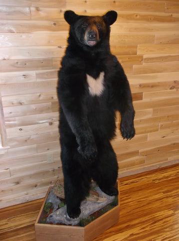 Black Bear Lifesize #10002
