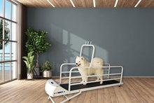 Load image into Gallery viewer, Petrun-Enclosed Large Dog Treadmill-PR725