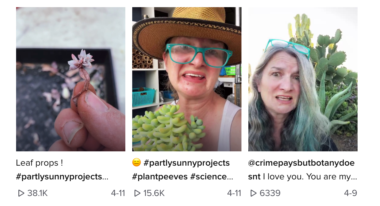 A screengrab of Partly Sunny Projects on TikTok